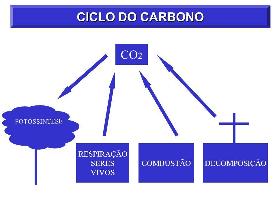 CICLO DO CARBONO CO 2 RESPIRAÇÃO SERES VIVOS COMBUSTÃO DECOMPOSIÇÃO FOTOSSÍNTESE