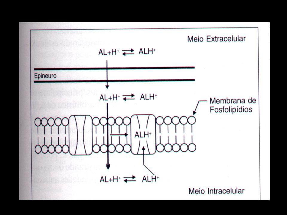 Anestésicos Locais Absorção - pele lesionada X pele íntegra (EMLA) - córnea - mucosas - epitélio das vias respiratórias - intramuscular - subcutânea - intravenosa