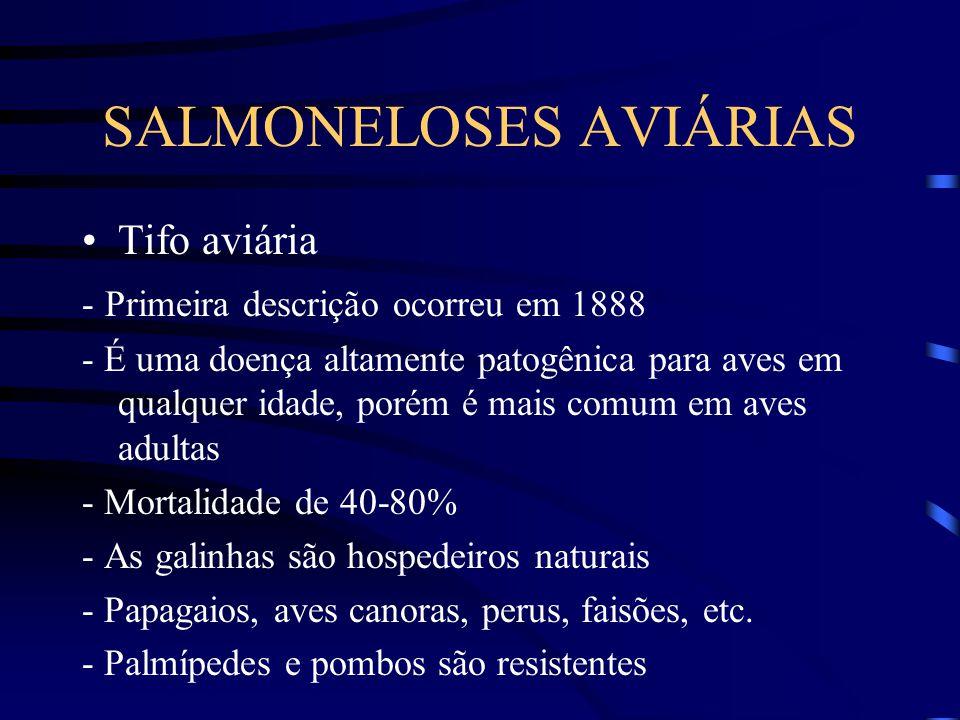 SALMONELOSES AVIÁRIAS Tifo aviária - Primeira descrição ocorreu em 1888 - É uma doença altamente patogênica para aves em qualquer idade, porém é mais comum em aves adultas - Mortalidade de 40-80% - As galinhas são hospedeiros naturais - Papagaios, aves canoras, perus, faisões, etc.