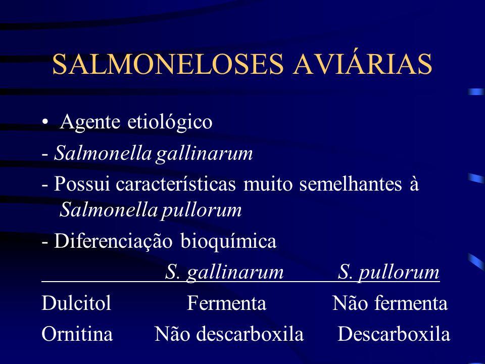 SALMONELOSES AVIÁRIAS Agente etiológico - Salmonella gallinarum - Possui características muito semelhantes à Salmonella pullorum - Diferenciação bioquímica S.