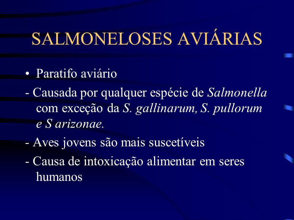SALMONELOSES AVIÁRIAS Paratifo aviário - Causada por qualquer espécie de Salmonella com exceção da S.