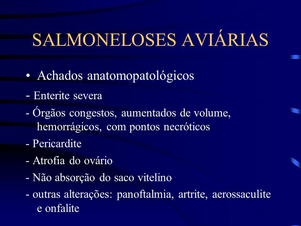 SALMONELOSES AVIÁRIAS Achados anatomopatológicos - Enterite severa - Órgãos congestos, aumentados de volume, hemorrágicos, com pontos necróticos - Pericardite - Atrofia do ovário - Não absorção do saco vitelino - outras alterações: panoftalmia, artrite, aerossaculite e onfalite