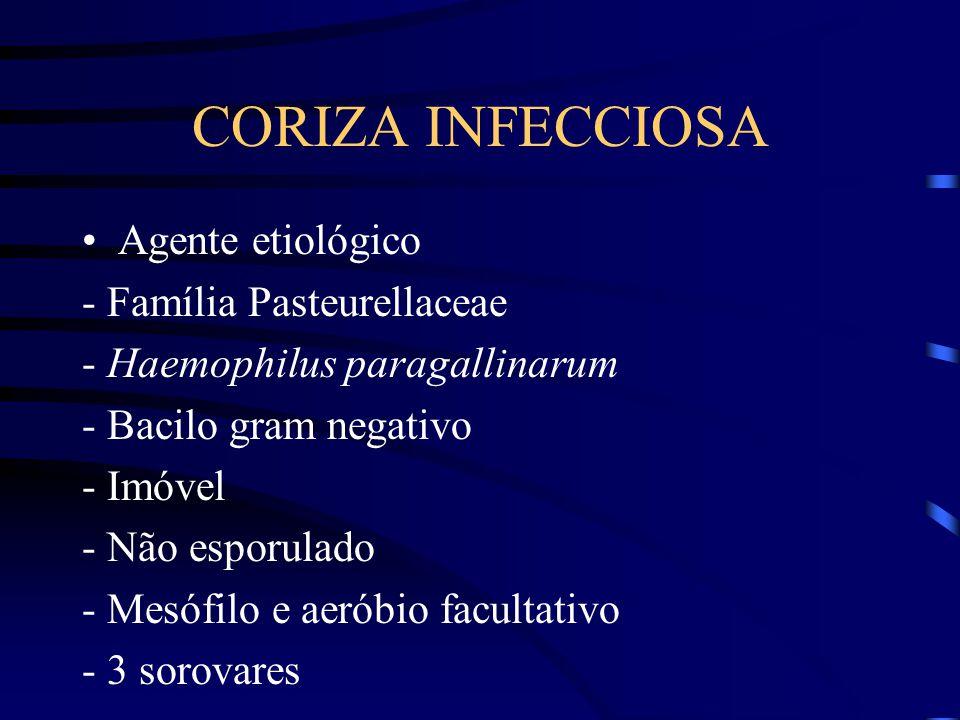 CORIZA INFECCIOSA Agente etiológico - Família Pasteurellaceae - Haemophilus paragallinarum - Bacilo gram negativo - Imóvel - Não esporulado - Mesófilo e aeróbio facultativo - 3 sorovares