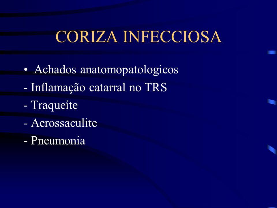 CORIZA INFECCIOSA Achados anatomopatologicos - Inflamação catarral no TRS - Traqueíte - Aerossaculite - Pneumonia
