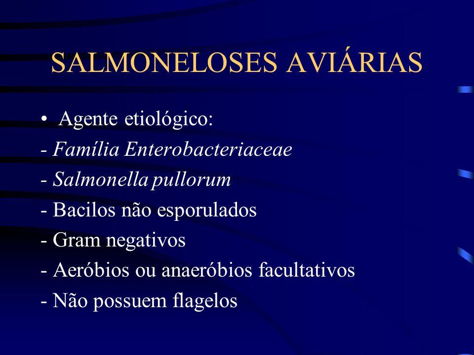 SALMONELOSES AVIÁRIAS Agente etiológico: - Família Enterobacteriaceae - Salmonella pullorum - Bacilos não esporulados - Gram negativos - Aeróbios ou anaeróbios facultativos - Não possuem flagelos