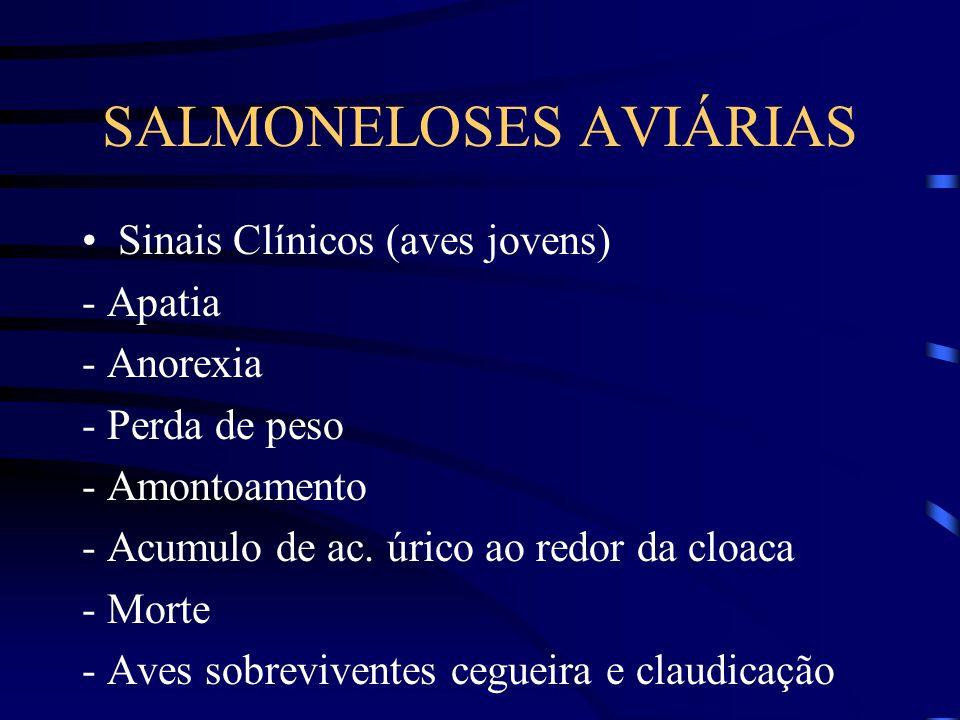 SALMONELOSES AVIÁRIAS Sinais Clínicos (aves jovens) - Apatia - Anorexia - Perda de peso - Amontoamento - Acumulo de ac.