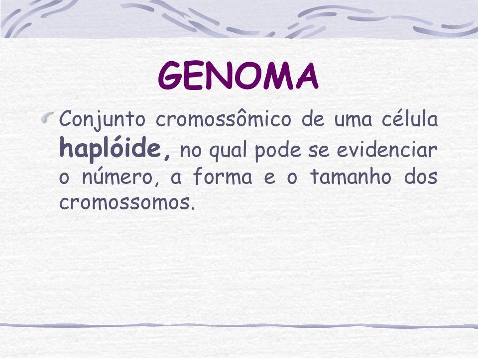 GENOMA Conjunto cromossômico de uma célula haplóide, no qual pode se evidenciar o número, a forma e o tamanho dos cromossomos.