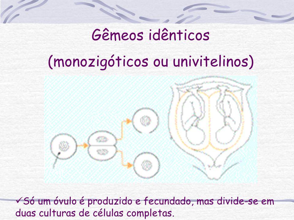 Só um óvulo é produzido e fecundado, mas divide-se em duas culturas de células completas. Gêmeos idênticos (monozigóticos ou univitelinos)