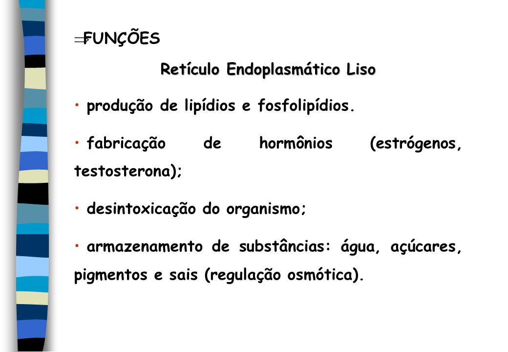FUNÇÕES Retículo Endoplasmático Liso produção de lipídios e fosfolipídios. fabricação de hormônios (estrógenos, testosterona); desintoxicação do organ