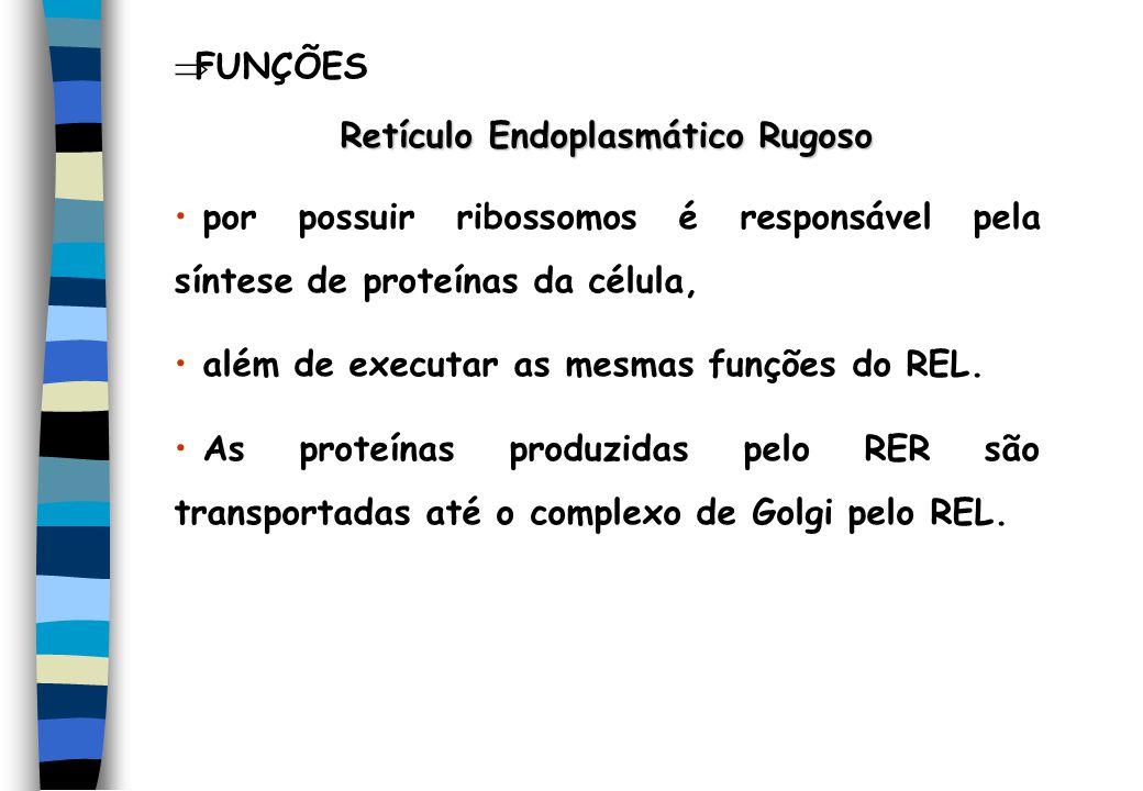 FUNÇÕES Retículo Endoplasmático Rugoso por possuir ribossomos é responsável pela síntese de proteínas da célula, além de executar as mesmas funções do