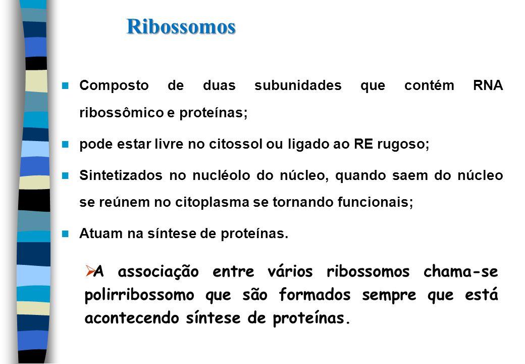Composto de duas subunidades que contém RNA ribossômico e proteínas; pode estar livre no citossol ou ligado ao RE rugoso; Sintetizados no nucléolo do