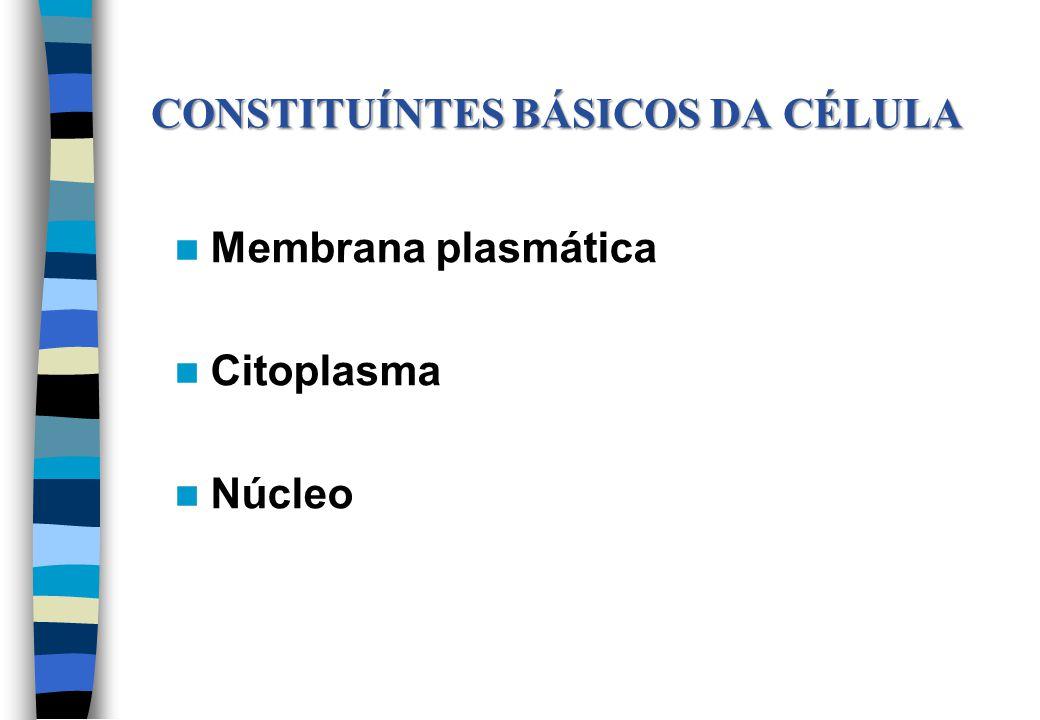 Membrana plasmática Citoplasma Núcleo CONSTITUÍNTES BÁSICOS DA CÉLULA CONSTITUÍNTES BÁSICOS DA CÉLULA