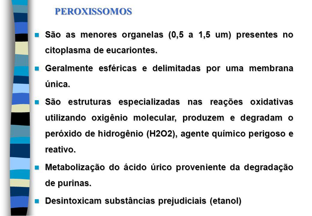 PEROXISSOMOS São as menores organelas (0,5 a 1,5 um) presentes no citoplasma de eucariontes. São as menores organelas (0,5 a 1,5 um) presentes no cito