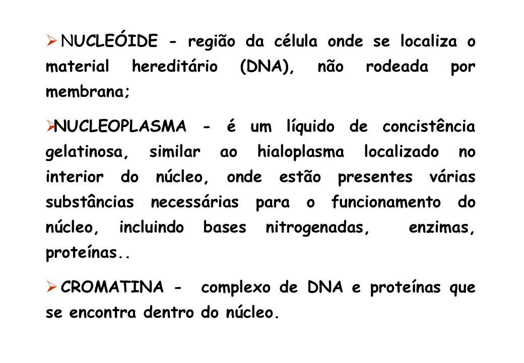 NUCLEÓIDE - região da célula onde se localiza o material hereditário (DNA), não rodeada por membrana; NUCLEOPLASMA - é um líquido de concistência gela