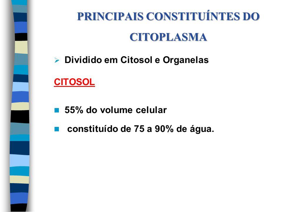 Dividido em Citosol e Organelas CITOSOL 55% do volume celular constituído de 75 a 90% de água. PRINCIPAIS CONSTITUÍNTES DO CITOPLASMA