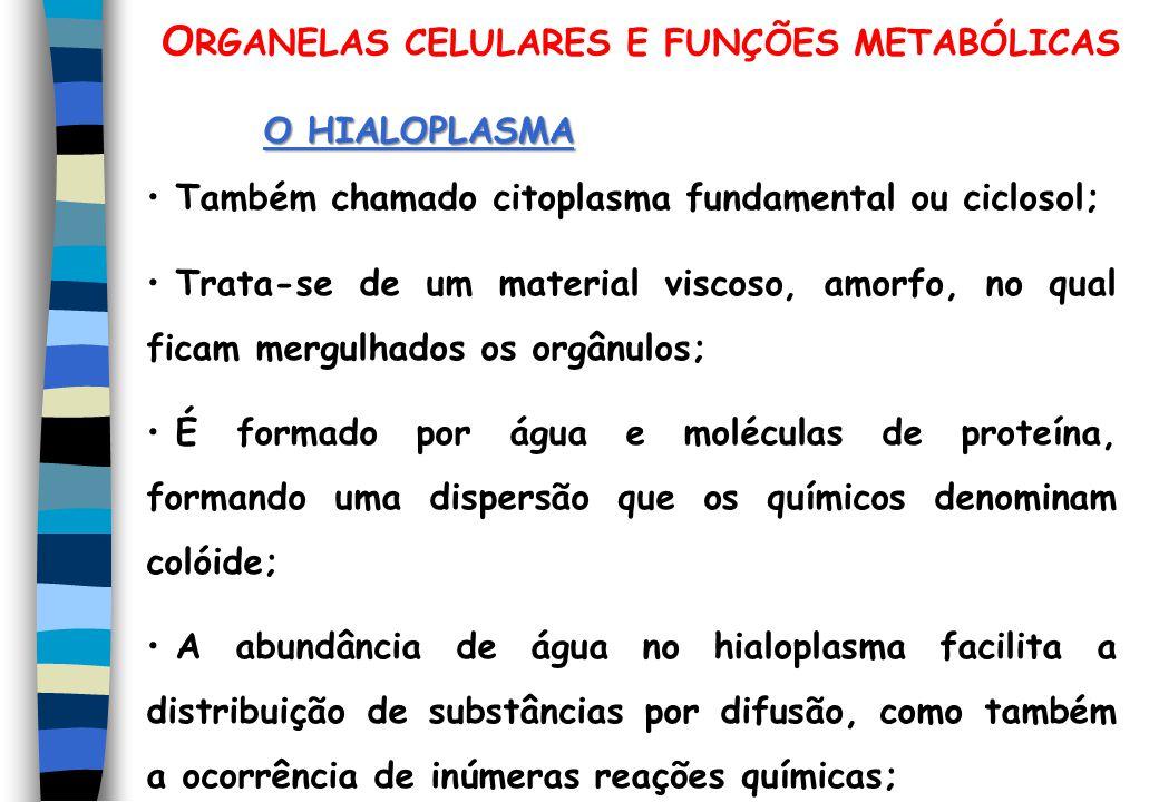O RGANELAS CELULARES E FUNÇÕES METABÓLICAS O HIALOPLASMA Também chamado citoplasma fundamental ou ciclosol; Trata-se de um material viscoso, amorfo, n