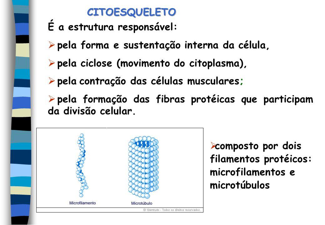 CITOESQUELETO É a estrutura responsável: pela forma e sustentação interna da célula, pela ciclose (movimento do citoplasma), pela contração das célula