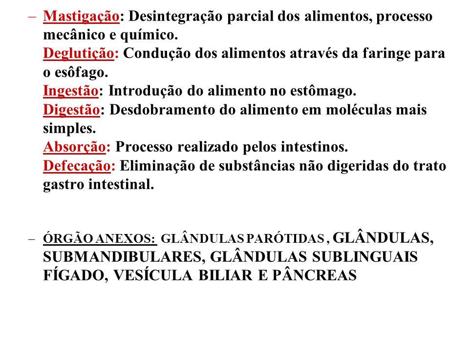–Mastigação: Desintegração parcial dos alimentos, processo mecânico e químico. Deglutição: Condução dos alimentos através da faringe para o esôfago. I