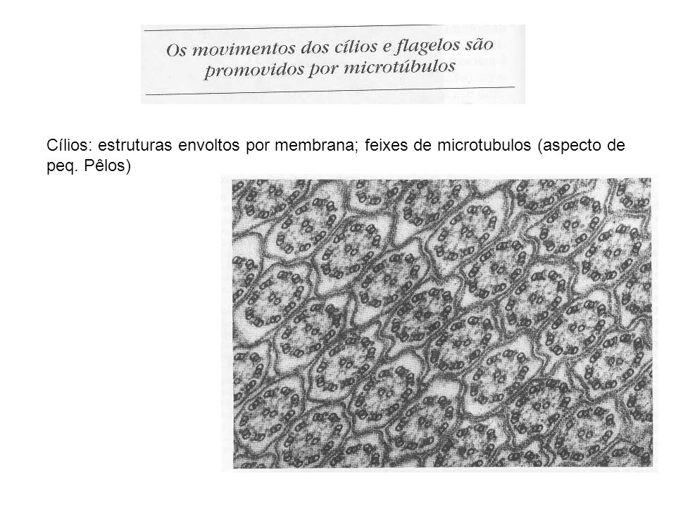 Cílios: estruturas envoltos por membrana; feixes de microtubulos (aspecto de peq. Pêlos)