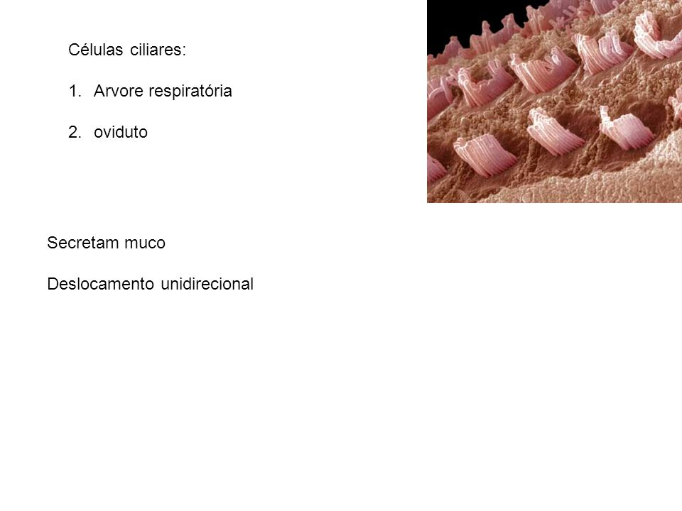 Células ciliares: 1.Arvore respiratória 2.oviduto Secretam muco Deslocamento unidirecional