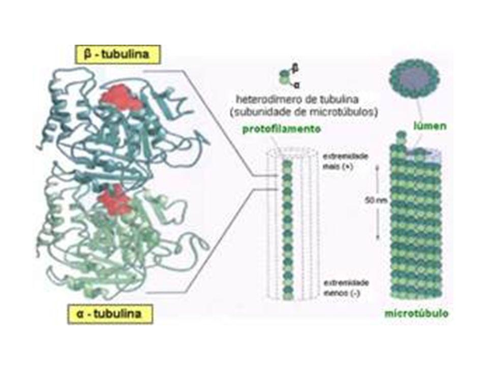 Funções: 1.Movimentação de cilios e flagelos 2.Transporte intracelular de particulas 3.Deslocamento dos cromossomas na mitose 4.Estabelecimento e manutenção do formato das celulas