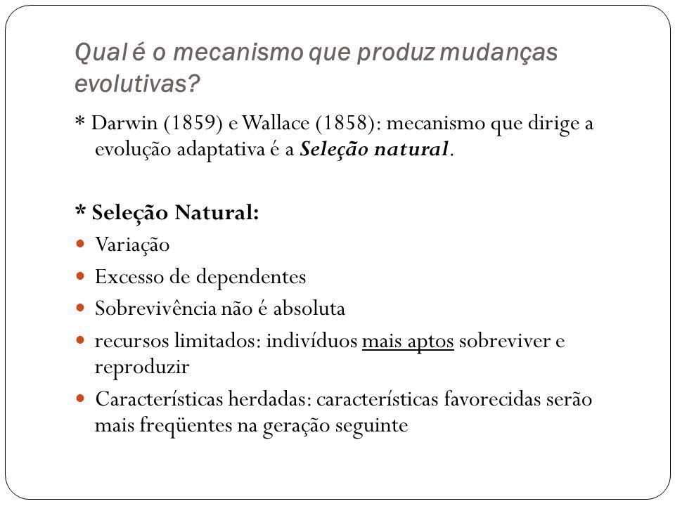 Qual é o mecanismo que produz mudanças evolutivas? * Darwin (1859) e Wallace (1858): mecanismo que dirige a evolução adaptativa é a Seleção natural. *