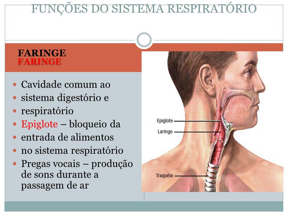 FARINGE Cavidade comum ao sistema digestório e respiratório Epiglote – bloqueio da entrada de alimentos no sistema respiratório Pregas vocais – produç