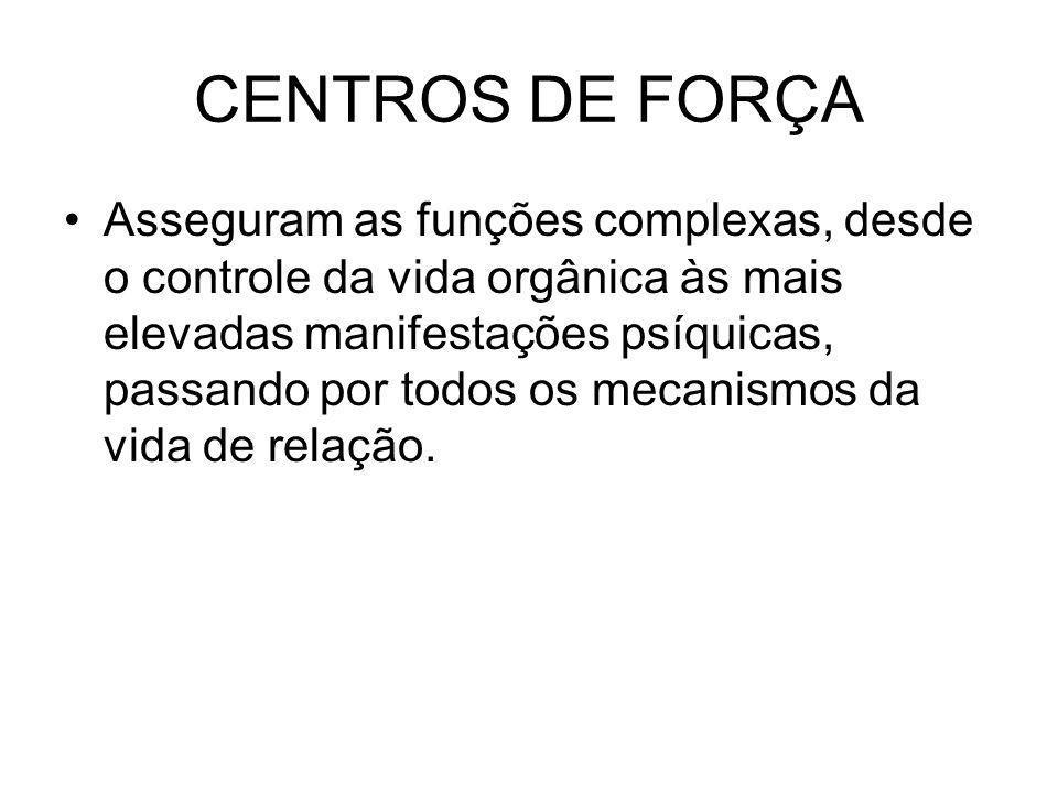 CENTROS DE FORÇA Asseguram as funções complexas, desde o controle da vida orgânica às mais elevadas manifestações psíquicas, passando por todos os mecanismos da vida de relação.