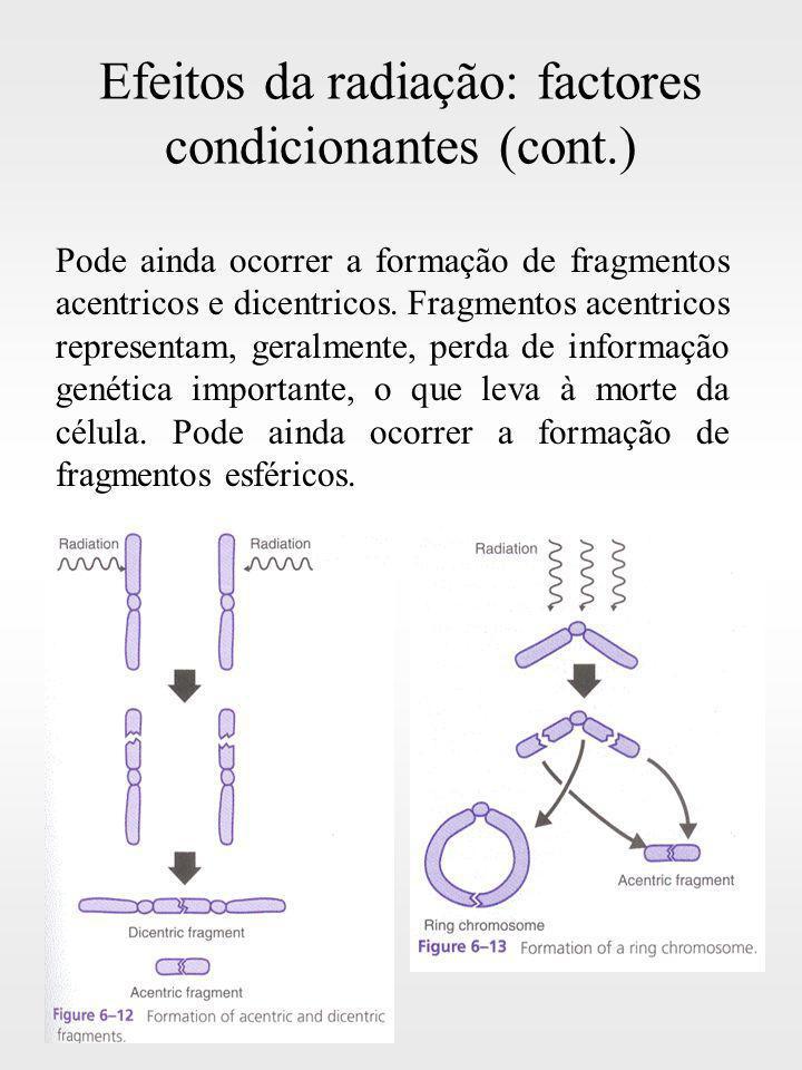 Efeitos da radiação: factores condicionantes (cont.) Pode ainda ocorrer a formação de fragmentos acentricos e dicentricos. Fragmentos acentricos repre