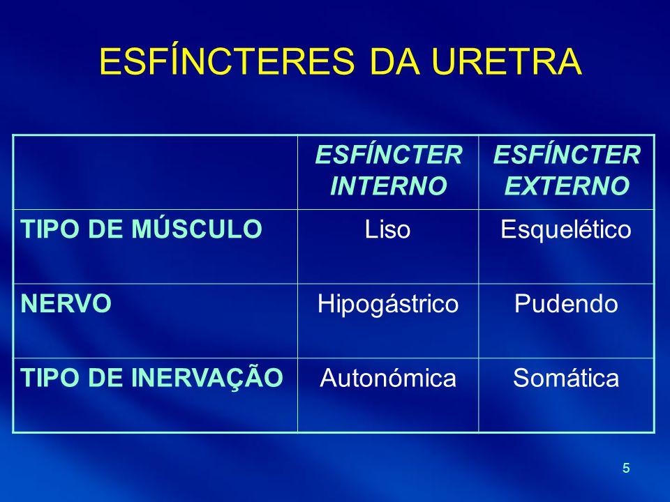 5 ESFÍNCTERES DA URETRA ESFÍNCTER INTERNO ESFÍNCTER EXTERNO TIPO DE MÚSCULOLisoEsquelético NERVOHipogástricoPudendo TIPO DE INERVAÇÃOAutonómicaSomátic