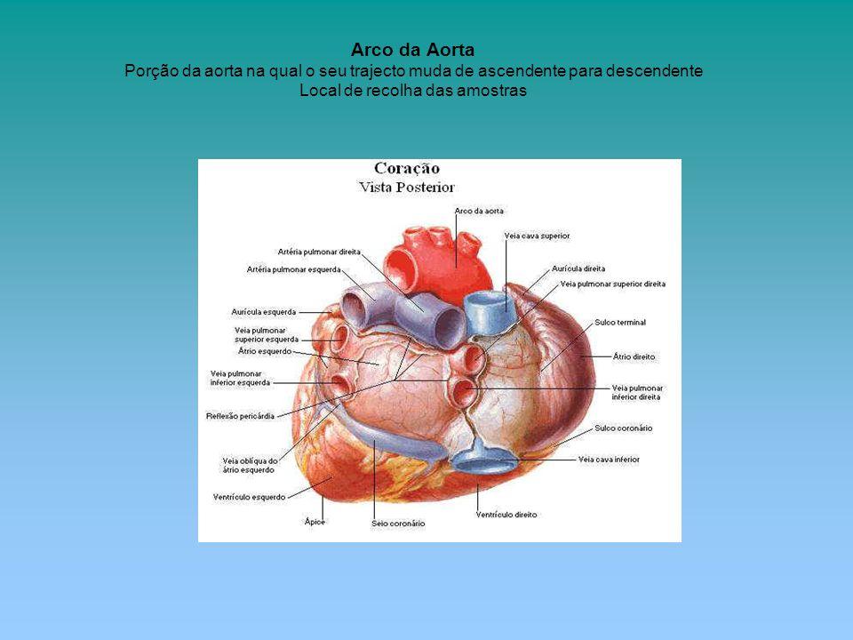 Arco da Aorta Porção da aorta na qual o seu trajecto muda de ascendente para descendente Local de recolha das amostras