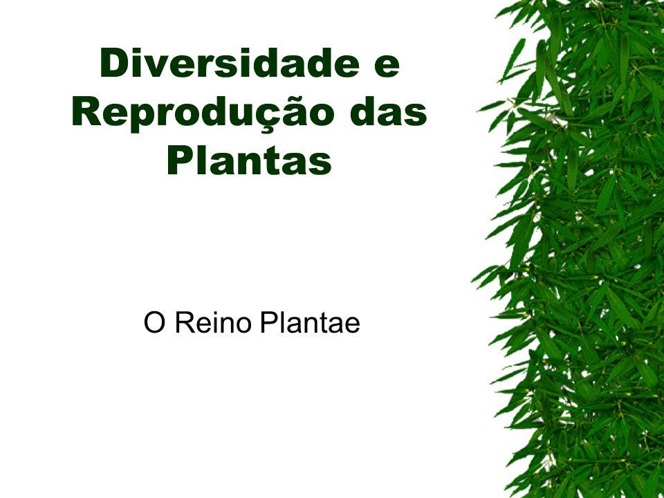 Diversidade e Reprodução das Plantas O Reino Plantae