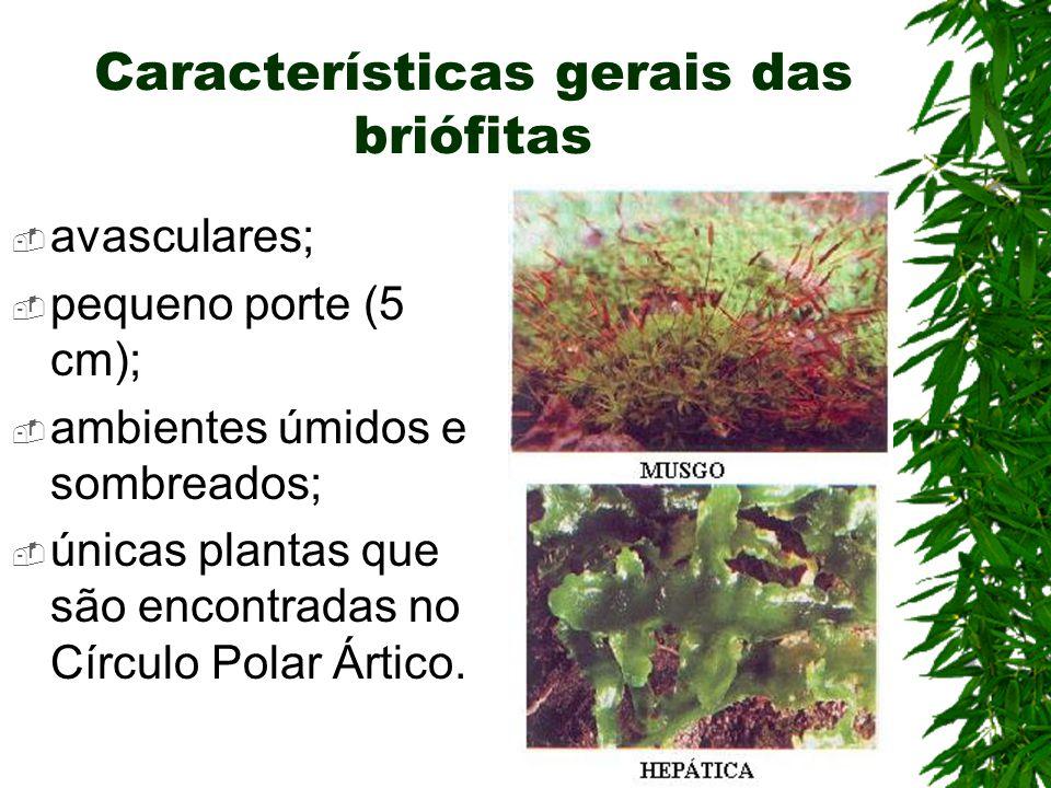 Características gerais das briófitas avasculares; pequeno porte (5 cm); ambientes úmidos e sombreados; únicas plantas que são encontradas no Círculo Polar Ártico.