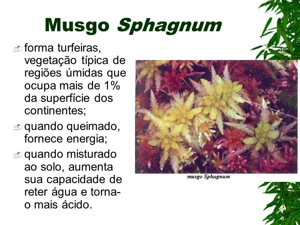 Musgo Sphagnum forma turfeiras, vegetação típica de regiões úmidas que ocupa mais de 1% da superfície dos continentes; quando queimado, fornece energia; quando misturado ao solo, aumenta sua capacidade de reter água e torna- o mais ácido.