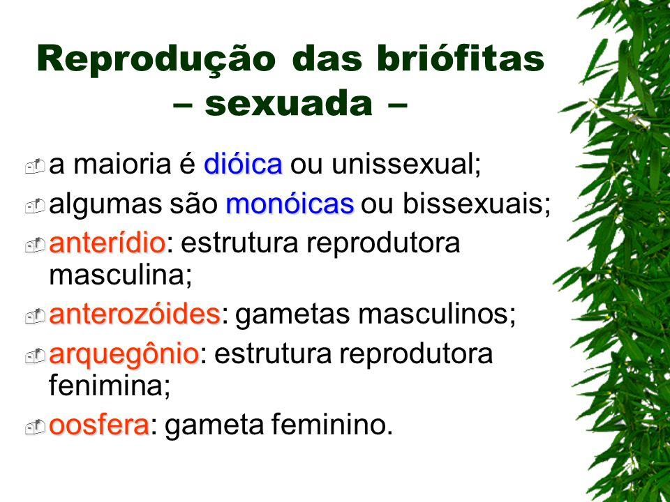Reprodução das briófitas – sexuada – dióica a maioria é dióica ou unissexual; monóicas algumas são monóicas ou bissexuais; anterídio anterídio: estrut