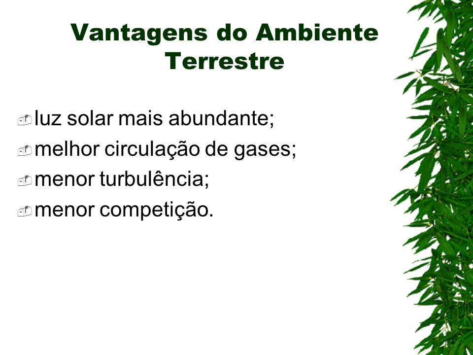 Vantagens do Ambiente Terrestre luz solar mais abundante; melhor circulação de gases; menor turbulência; menor competição.