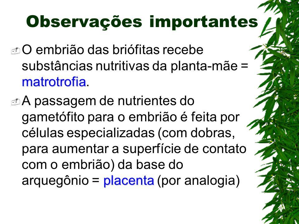 Observações importantes matrotrofia O embrião das briófitas recebe substâncias nutritivas da planta-mãe = matrotrofia. placenta A passagem de nutrient