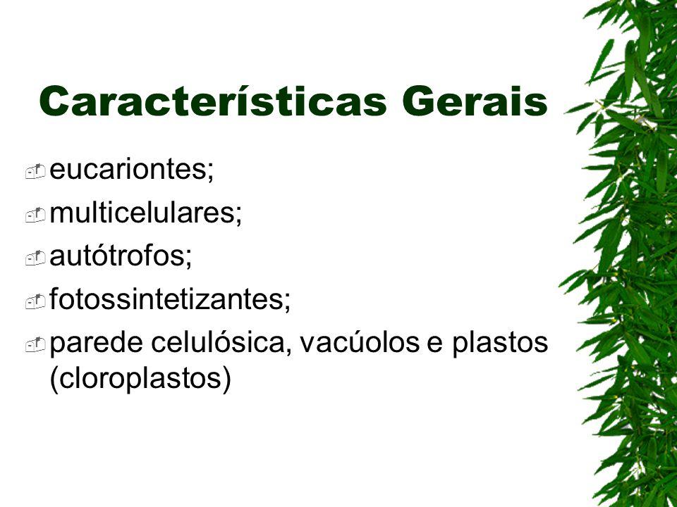 Características Gerais eucariontes; multicelulares; autótrofos; fotossintetizantes; parede celulósica, vacúolos e plastos (cloroplastos)