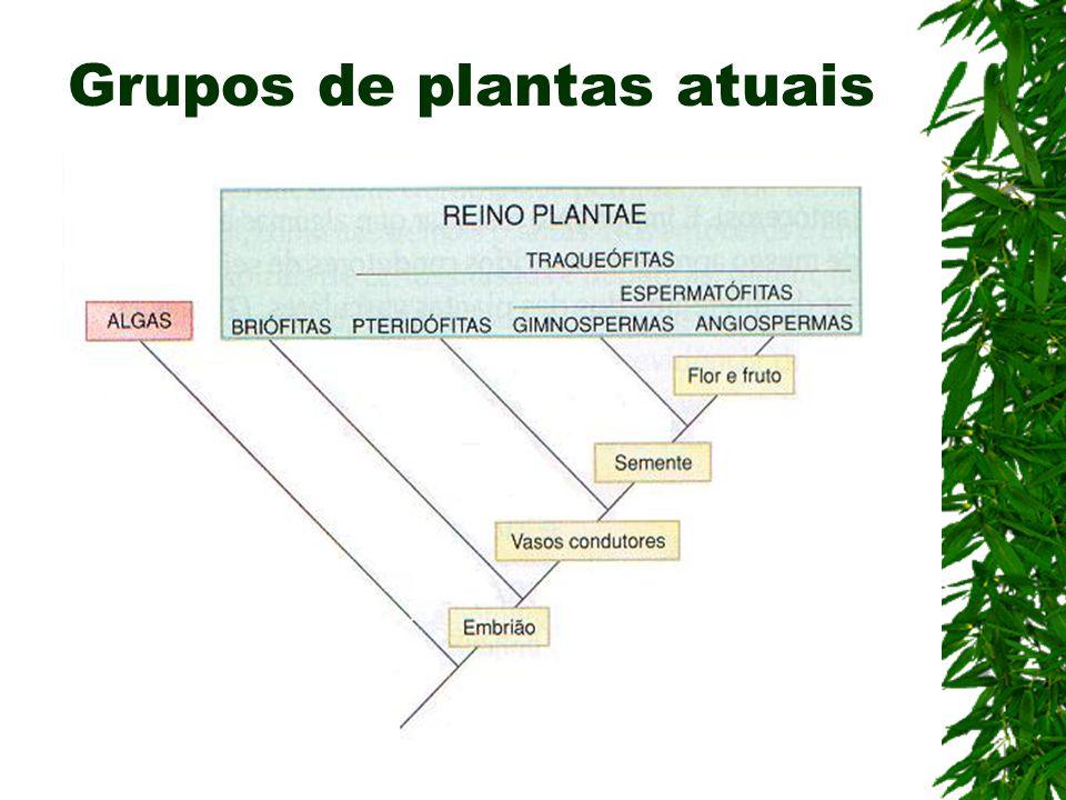 Grupos de plantas atuais