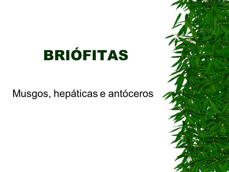 BRIÓFITAS Musgos, hepáticas e antóceros