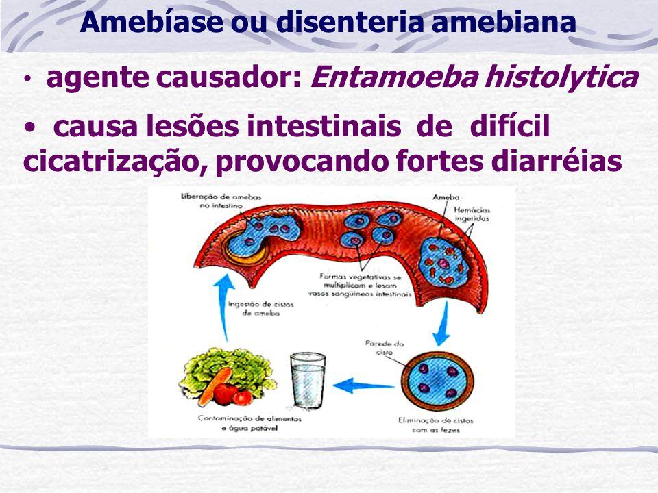 agente causador: Entamoeba histolytica causa lesões intestinais de difícil cicatrização, provocando fortes diarréias Amebíase ou disenteria amebiana