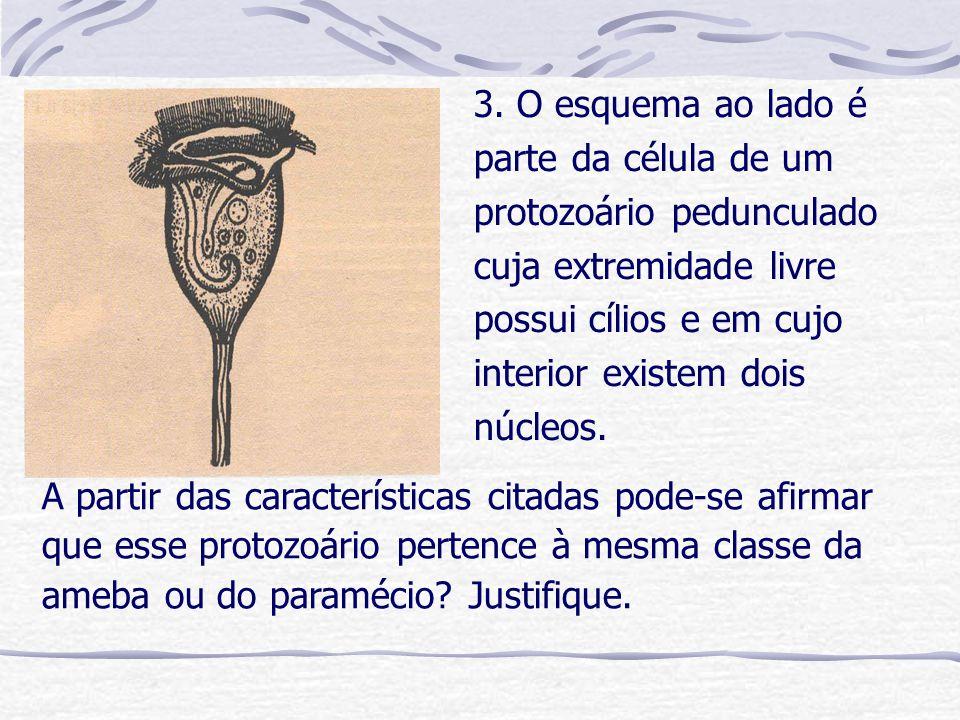3. O esquema ao lado é parte da célula de um protozoário pedunculado cuja extremidade livre possui cílios e em cujo interior existem dois núcleos. A p