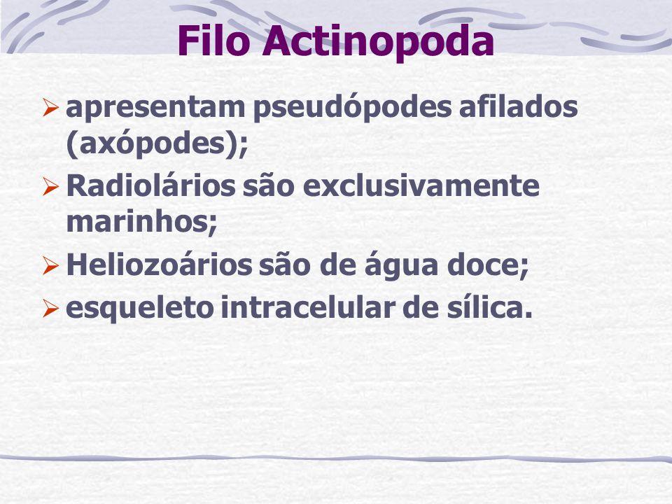 Filo Actinopoda apresentam pseudópodes afilados (axópodes); Radiolários são exclusivamente marinhos; Heliozoários são de água doce; esqueleto intracel