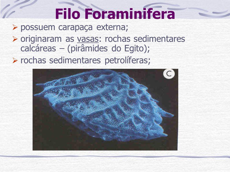 Filo Foraminifera possuem carapaça externa; originaram as vasas: rochas sedimentares calcáreas – (pirâmides do Egito); rochas sedimentares petrolífera