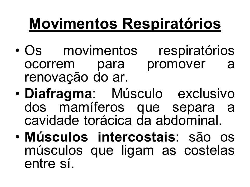 Movimentos Respiratórios Os movimentos respiratórios ocorrem para promover a renovação do ar. Diafragma: Músculo exclusivo dos mamíferos que separa a