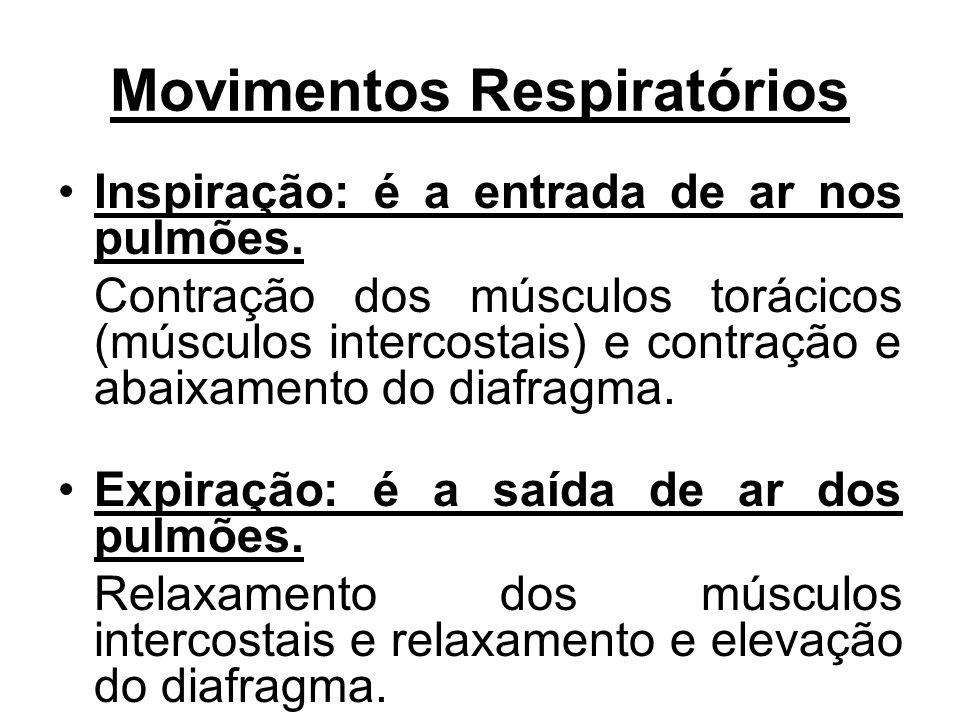 Movimentos Respiratórios Inspiração: é a entrada de ar nos pulmões. Contração dos músculos torácicos (músculos intercostais) e contração e abaixamento