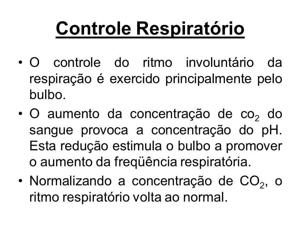 O controle do ritmo involuntário da respiração é exercido principalmente pelo bulbo. O aumento da concentração de co 2 do sangue provoca a concentraçã