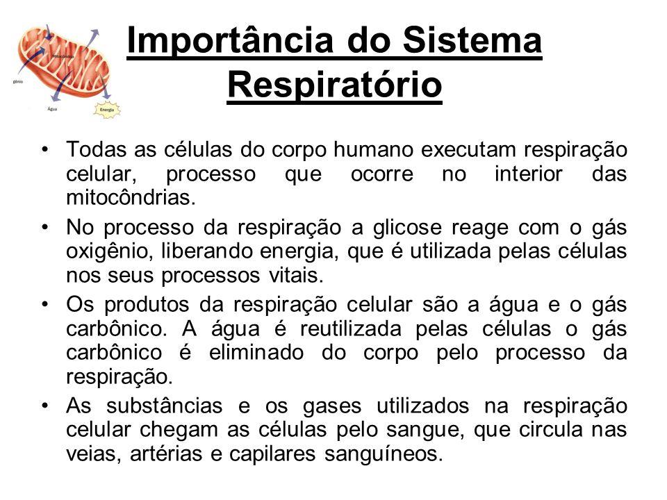 Importância do Sistema Respiratório Todas as células do corpo humano executam respiração celular, processo que ocorre no interior das mitocôndrias. No