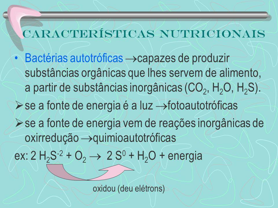Bactérias autotróficas capazes de produzir substâncias orgânicas que lhes servem de alimento, a partir de substâncias inorgânicas (CO 2, H 2 O, H 2 S)