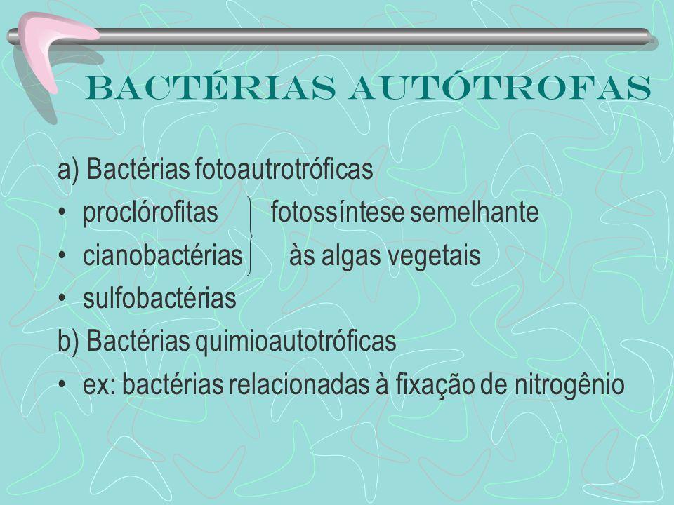 Bactérias autótrofas a) Bactérias fotoautrotróficas proclórofitas fotossíntese semelhante cianobactérias às algas vegetais sulfobactérias b) Bactérias